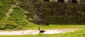 Tikal-Mayan-Temple