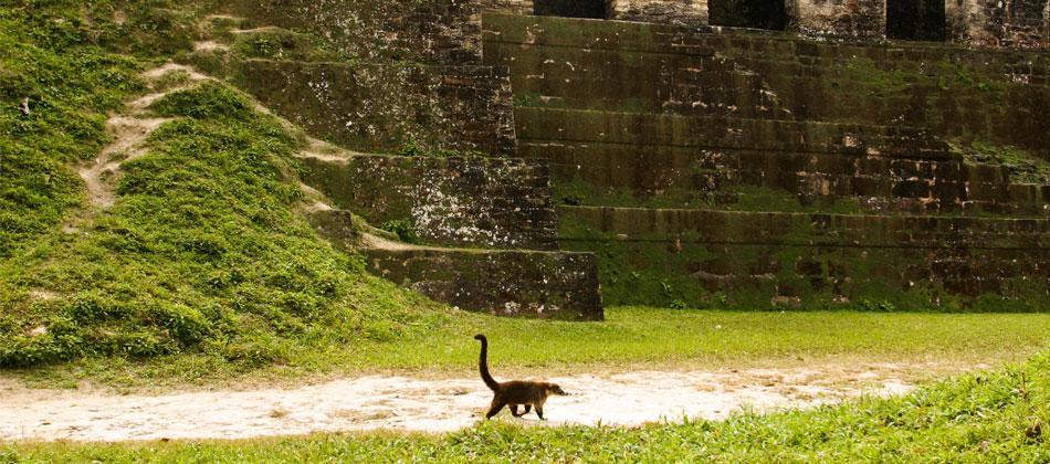 Tikal-flora-fuana