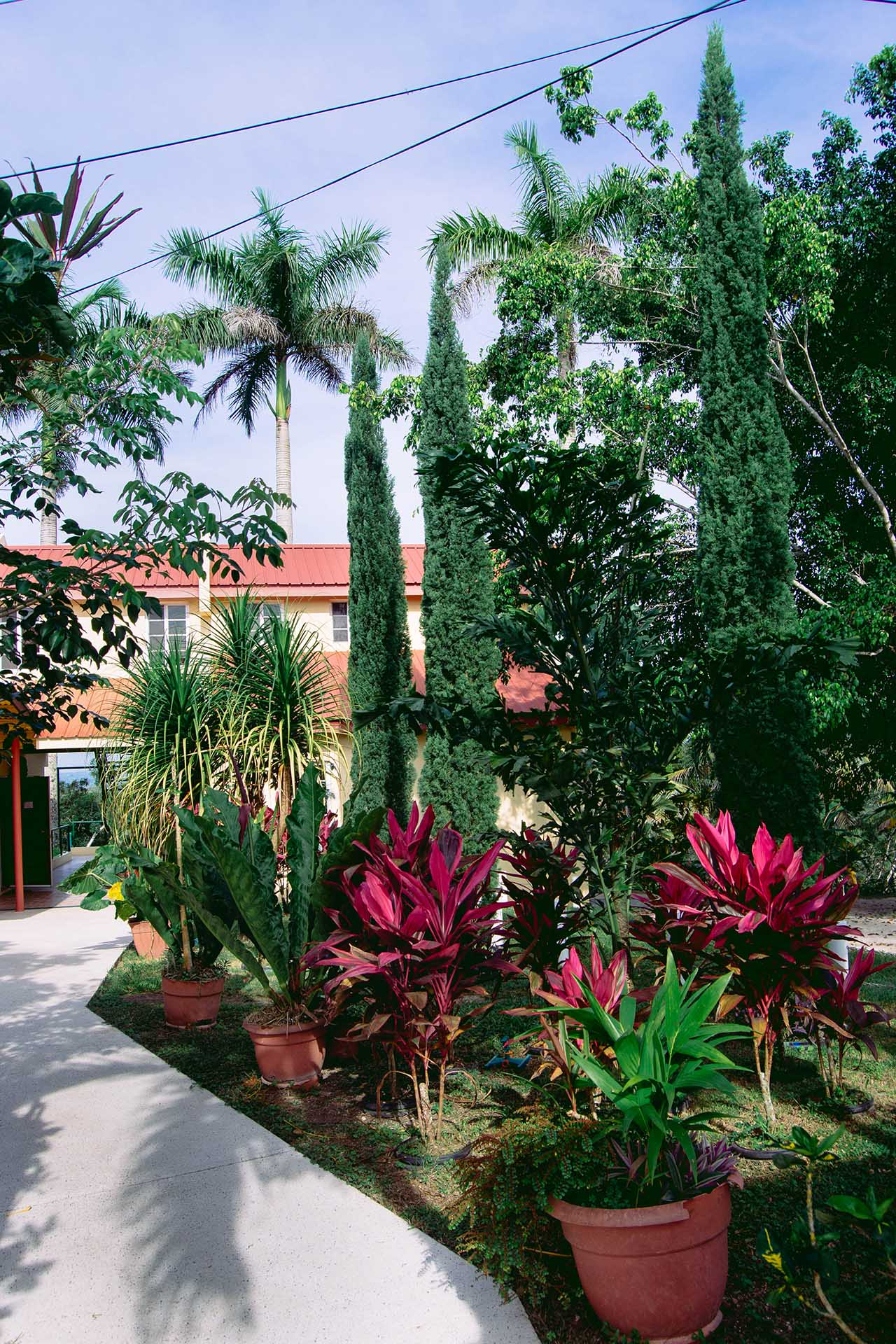 View-of-Rumors-Garden